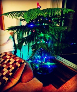 Our 'all year round' Christmas tree getting it's lights